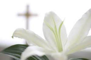 article_Easter_Lily