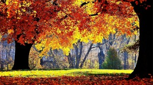 Golden-Autumn-Beautiful-Bright-Forest-Golden-Leaf-1024x576