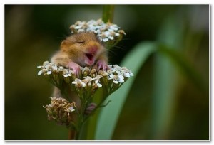 funny-animal-laughter_1
