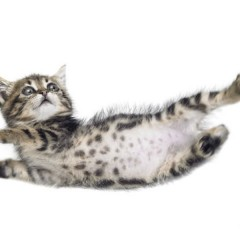 How Do Cats Survive Falls That Would Kill Humans ?