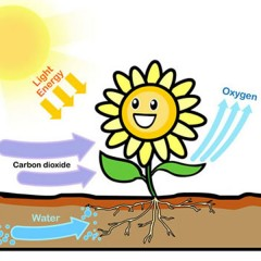 How do plants feed ?