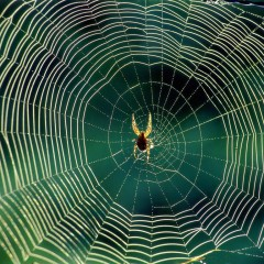 How do Spiders build their webs over such long distances ?