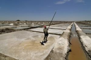 Harvesting Salt