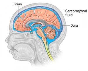 cerebrospina