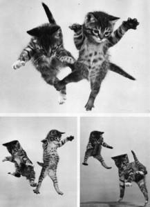 Falling Cats