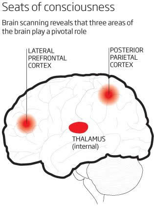 Conciousness In The Brain