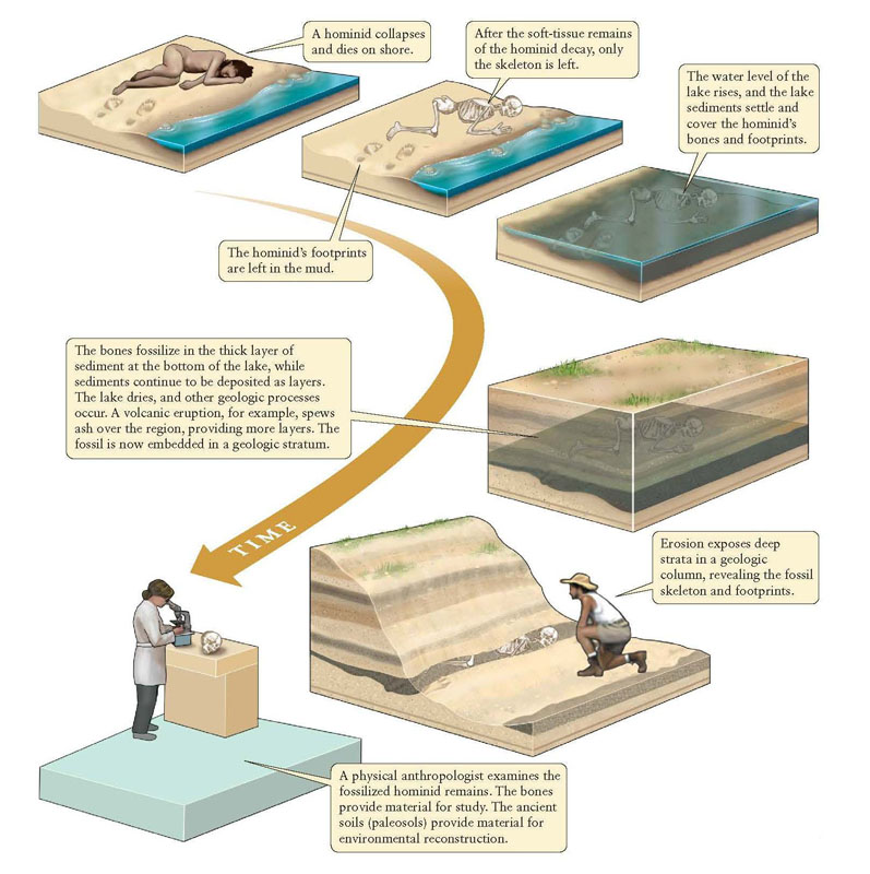 FossilizationOfBones