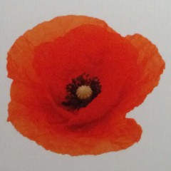 The Poppy and the Bleuet – Symbols of Enduring Rememberence