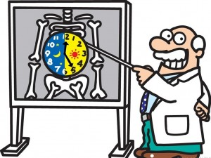 body_clock_cartoon