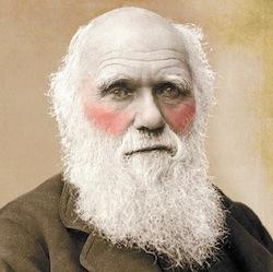 darwin-blushing