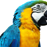 Are Humans and Parrots the only Living Organisms which have the Power of Speech?