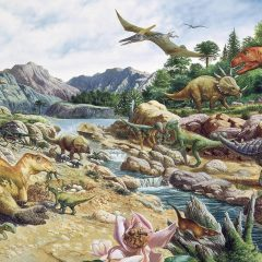 Is it possible to tell the sex of a Dinosaur?