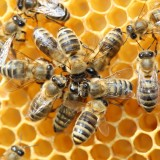 How Do Bees Communicate ? – And How we can use this for Internet Webservers