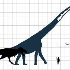 Why Were Some Dinosaurs so Large ?