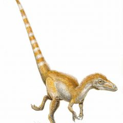 What Colour Were Dinosaurs?