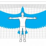 If Humans Could Fly How Big Would Their Wings Have to Be?