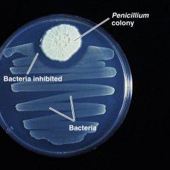 Penicillin – Wonderstuff